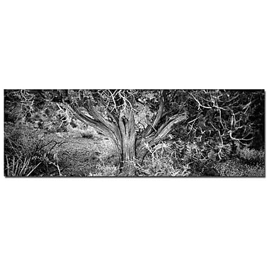 Trademark Fine Art Roots by Preston-Ready to Hang Art 16x48 Inches