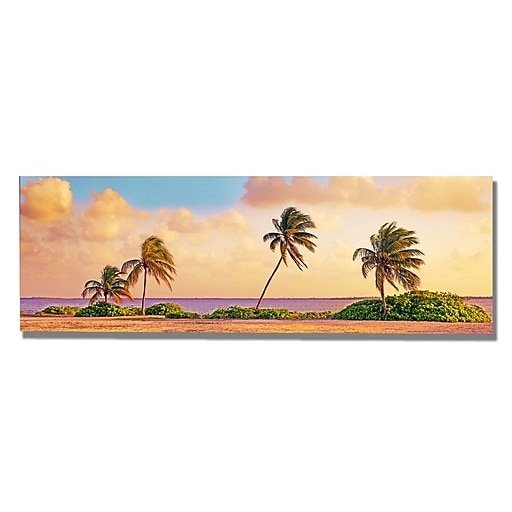 Trademark Fine Art Preston 'Cayman Palms' Canvas Art 16x47 Inches