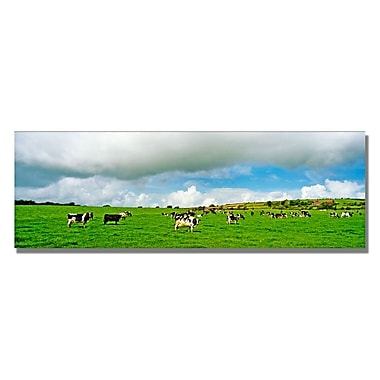 Trademark Fine Art Preston 'Irish Countryside' Canvas Art 12x32 Inches