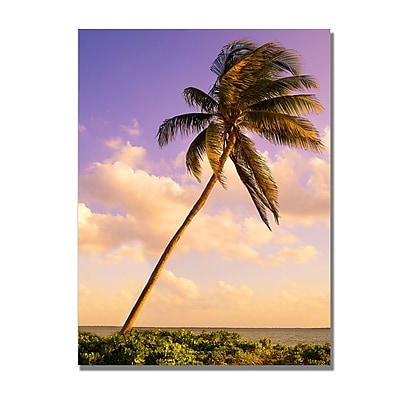 Trademark Fine Art Preston 'Lone Palm' Canvas Art 35x47 Inches