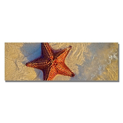 Trademark Fine Art Preston 'Starfish' Canvas Art 12x32 Inches