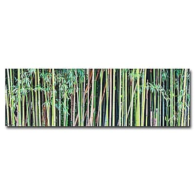 Trademark Fine Art Gregory Ohanlon 'Bamboo' Canvas Art 8x24 Inches