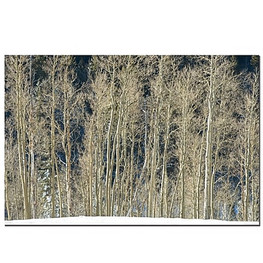 Trademark Fine Art Aspen Snow by AIANA Canvas Art Ready to Hang