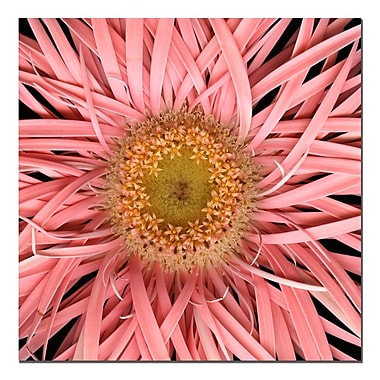 Trademark Fine Art AIANA 'Pink Spider' Canvas Art 35x35 Inches