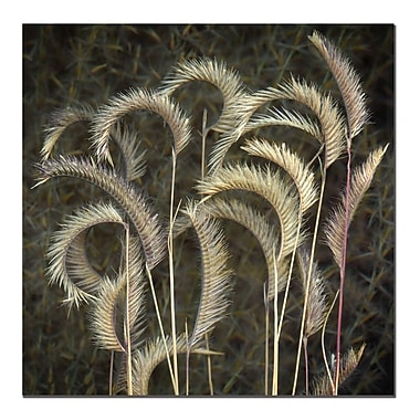 Trademark Fine Art Prairie Grass by AIANA-Ready to Hang Canvas Art 24x24 Inches