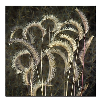 Trademark Fine Art AIANA 'Prairie Grass' Canvas Art 14x14 Inches