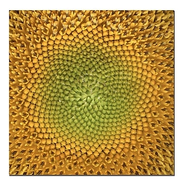 Trademark Fine Art AIANA 'Sunflower' Canvas Art 14x14 Inches