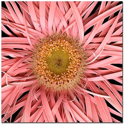 Trademark Fine Art Pink Spider by AIANA-Ready to Hang Canvas Art 24x24 Inches