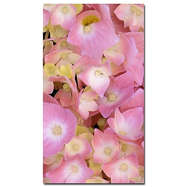 Trademark Fine Art Kathie McCurdy 'Pink Hydrangea' Canvas Art