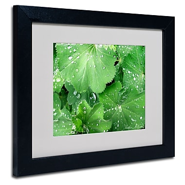 Trademark Fine Art Kathie McCurdy 'Water Droplets' Matted Art Black Frame 16x20 Inches
