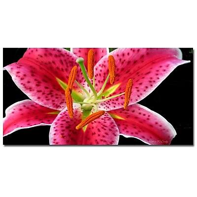 Trademark Fine Art Kathie McCurdy 'Stargazer Lily' Canvas Art 18x32 Inches, KM0142-C1832GG