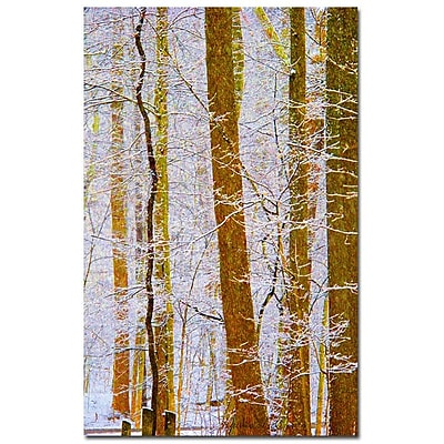 Trademark Fine Art Kathie McCurdy 'Sunflower' Canvas Art
