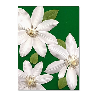 Trademark Fine Art Kathie McCurdy 'White Clemantis' Canvas Art