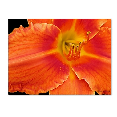 Trademark Fine Art Kathie McCurdy 'Orange Day Lily' Canvas Art