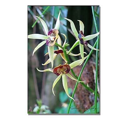 Trademark Fine Art Kathie McCurdy 'Orchids' Canvas Art 22x32 Inches