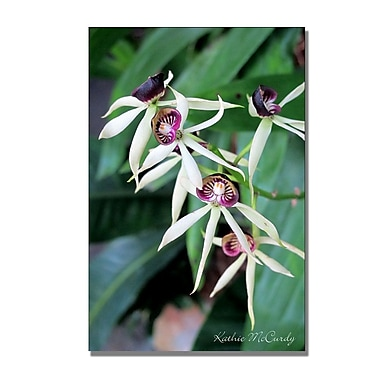 Trademark Fine Art Kathie McCurdy 'Orchids II' Canvas Art 30x47 Inches