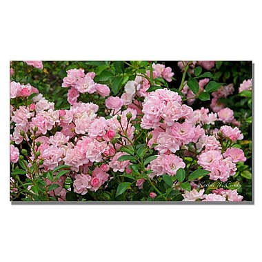 Trademark Fine Art Kathie McCurdy 'Pink Roses' Canvas Art 14x24 Inches
