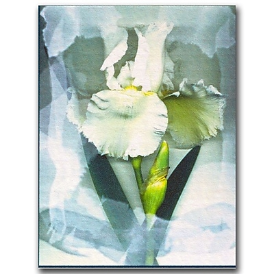 Trademark Fine Art Kathie McCurdy 'Sheer White Iris' Canvas Art Ready to Hang 14x19 Inches