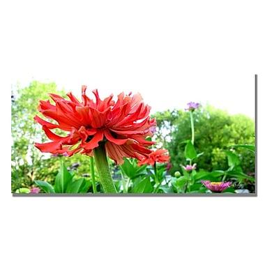 Trademark Fine Art Kathie McCurdy 'Zinnia Garden' Canvas Art 12x24 Inches