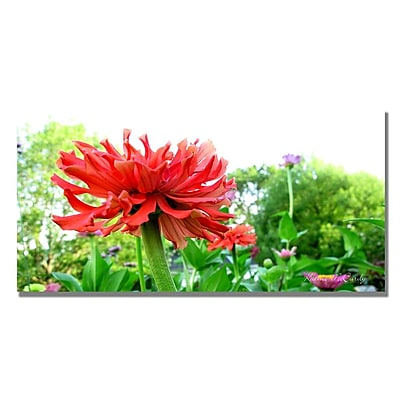 Trademark Fine Art Kathie McCurdy 'Zinnia Garden' Canvas Art 12x24 Inches