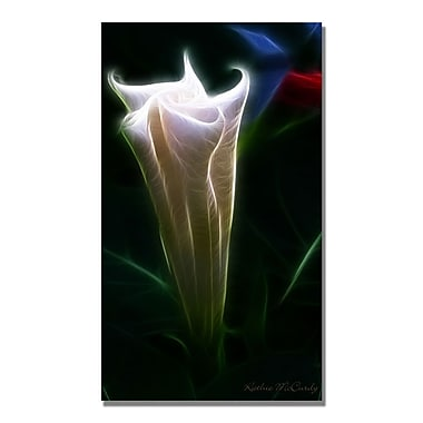 Trademark Fine Art Kathie McCurdy 'Moonflower Bud' Canvas Art 18x32 Inches