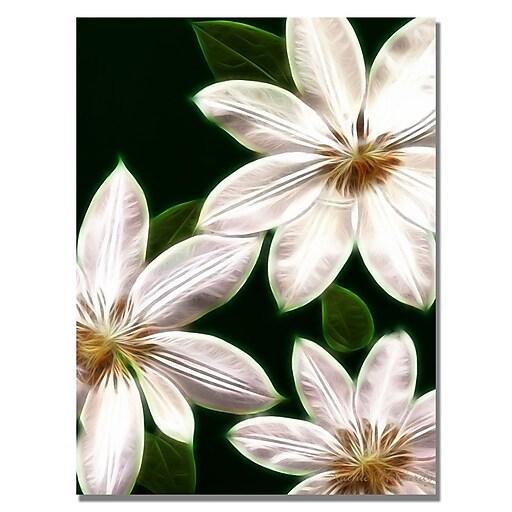 Trademark Fine Art Kathie McCurdy 'White Clematis' Canvas Art 24x32 Inches