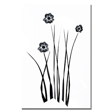 Trademark Fine Art Kathie McCurdy 'White and Black Bunch' Canvas Art 16x24 Inches