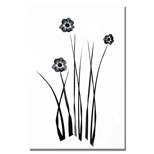 Trademark Fine Art Kathie McCurdy 'White and Black Bunch' Canvas Art 22x32 Inches