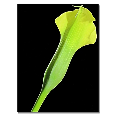 Trademark Fine Art Kathie McCurdy 'Yellow Calla' Canvas Art 18x24 Inches