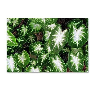 Trademark Fine Art Kathie McCurdy 'Hawaiian Garden II' Canvas Art