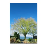 Trademark Fine Art Kathie McCurdy 'Wind to the Willow' Canvas Art