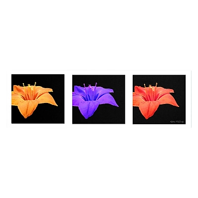 Trademark Fine Art Kathie McCurdy 'Amarillis Tryptic' Canvas Art 6x19 Inches