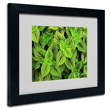 Trademark Fine Art Kathie McCurdy 'Coleus' Matted Art Black Frame 16x20 Inches