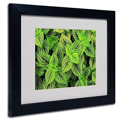 Trademark Fine Art Kathie McCurdy 'Coleus' Matted Art Black Frame 11x14 Inches