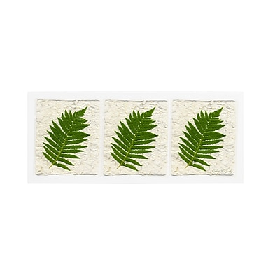 Trademark Fine Art Kathie McCurdy 'Ferns Finish' Canvas Art 20x47 Inches