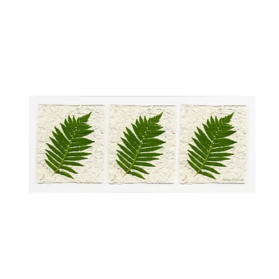 Trademark Fine Art Kathie McCurdy 'Ferns Finish' Canvas Art 10x24 Inches