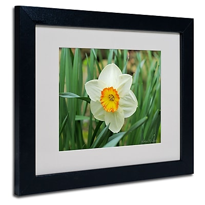 Trademark Fine Art Kathie McCurdy 'Furnace Run Daffodil' Matted Art Black Frame 11x14 Inches