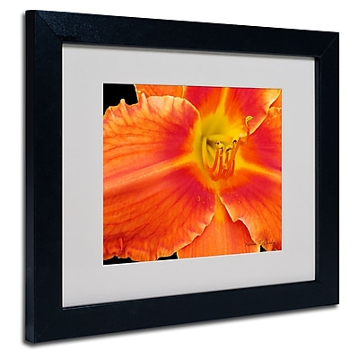 Trademark Fine Art Kathie McCurdy 'Orange Day Lily' Matted Art Black Frame 16x20 Inches