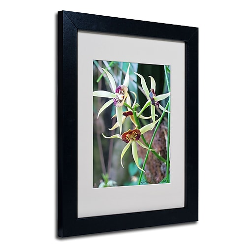 Trademark Fine Art Kathie McCurdy 'Orchids I' Matted Art Black Frame 11x14 Inches