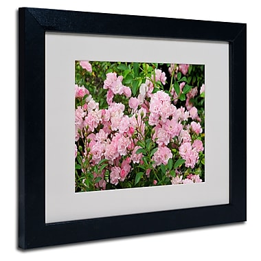 Trademark Fine Art Kathie McCurdy 'Pink Roses' Matted Art Black Frame 16x20 Inches