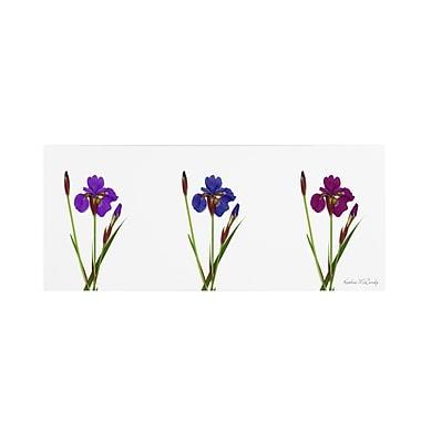 Trademark Fine Art Kathie McCurdy 'Siberian Iris Triptych' Canvas Art 6x19 Inches
