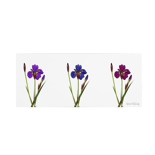 Trademark Fine Art Kathie McCurdy 'Siberian Iris Triptych' Canvas Art 16x47 Inches