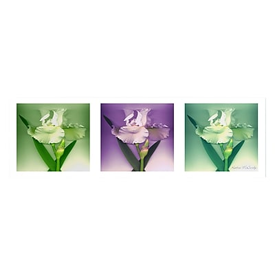 Trademark Fine Art Kathie McCurdy 'Three White Iris' Canvas Art 16x47 Inches