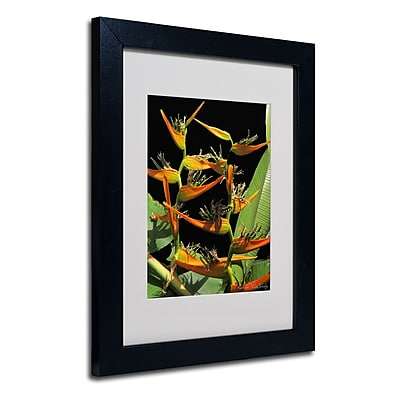 Trademark Fine Art Kathie McCurdy 'Tropical Paradise' Matted Art Black Frame 16x20 Inches