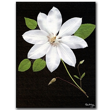 Trademark Fine Art Star by Kathie McCurdy-Canvas Art Ready to Hang 14x19 Inches