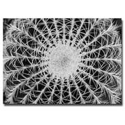 Trademark Fine Art Barrel Cactus by Kurt Shaffer-Ready to Hang 22x32 Inches