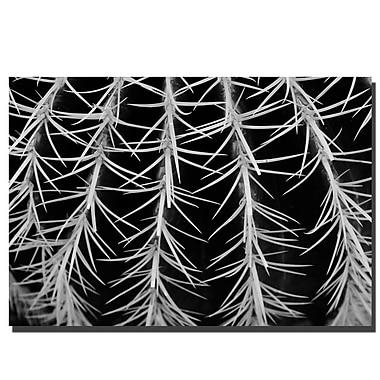 Trademark Fine Art Cactus by Kurt Shaffer