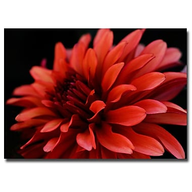 Trademark Fine Art Red Dhalia by Kurt Shaffer-Gallery Wrapped Canvas 14x19 Inches