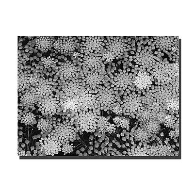 Trademark Fine Art Pattern on a Pond II by Kurt Shaffer-Gallery Wrapped