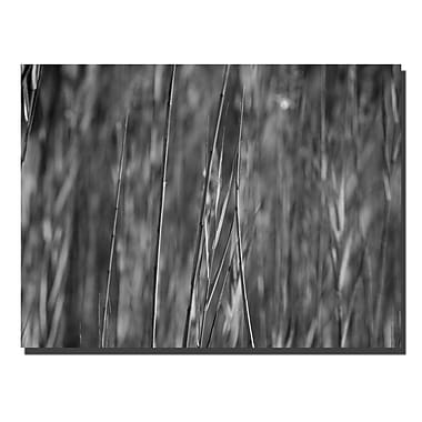 Trademark Fine Art Reed Abstrtact by Kurt Shaffer Canvas Ready to Hang 24x32 Inches